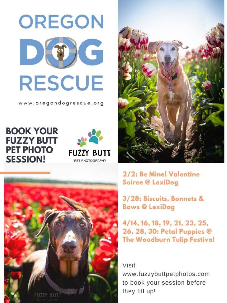 Oregon Dog Rescue