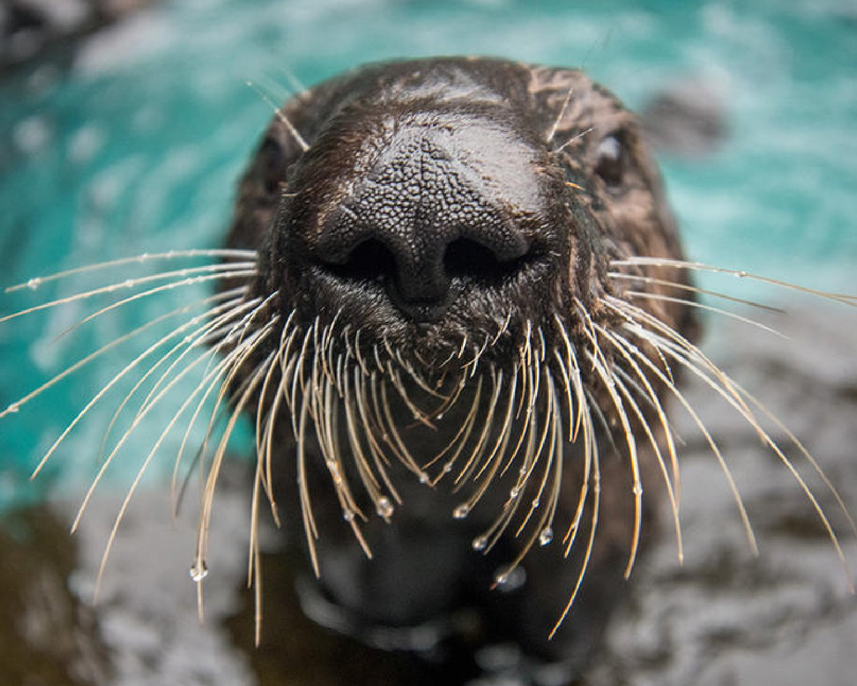 Oregon Zoo Streaming Videos