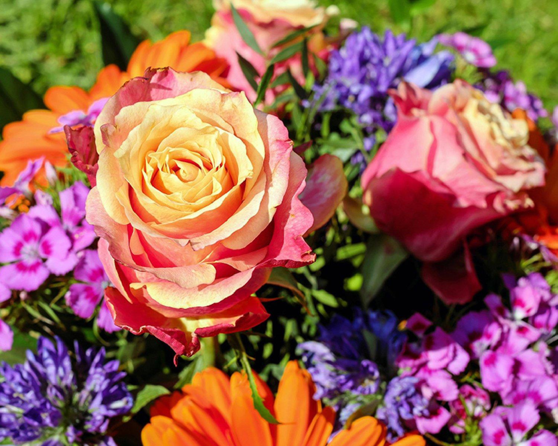 DENNIS' 7 DEES LANDSCAPING & GARDEN CENTERS Roses Oregon