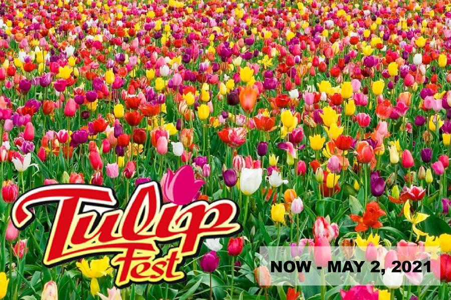 Wooden Shoe Tulip Festival 2021 Woodburn Oregon