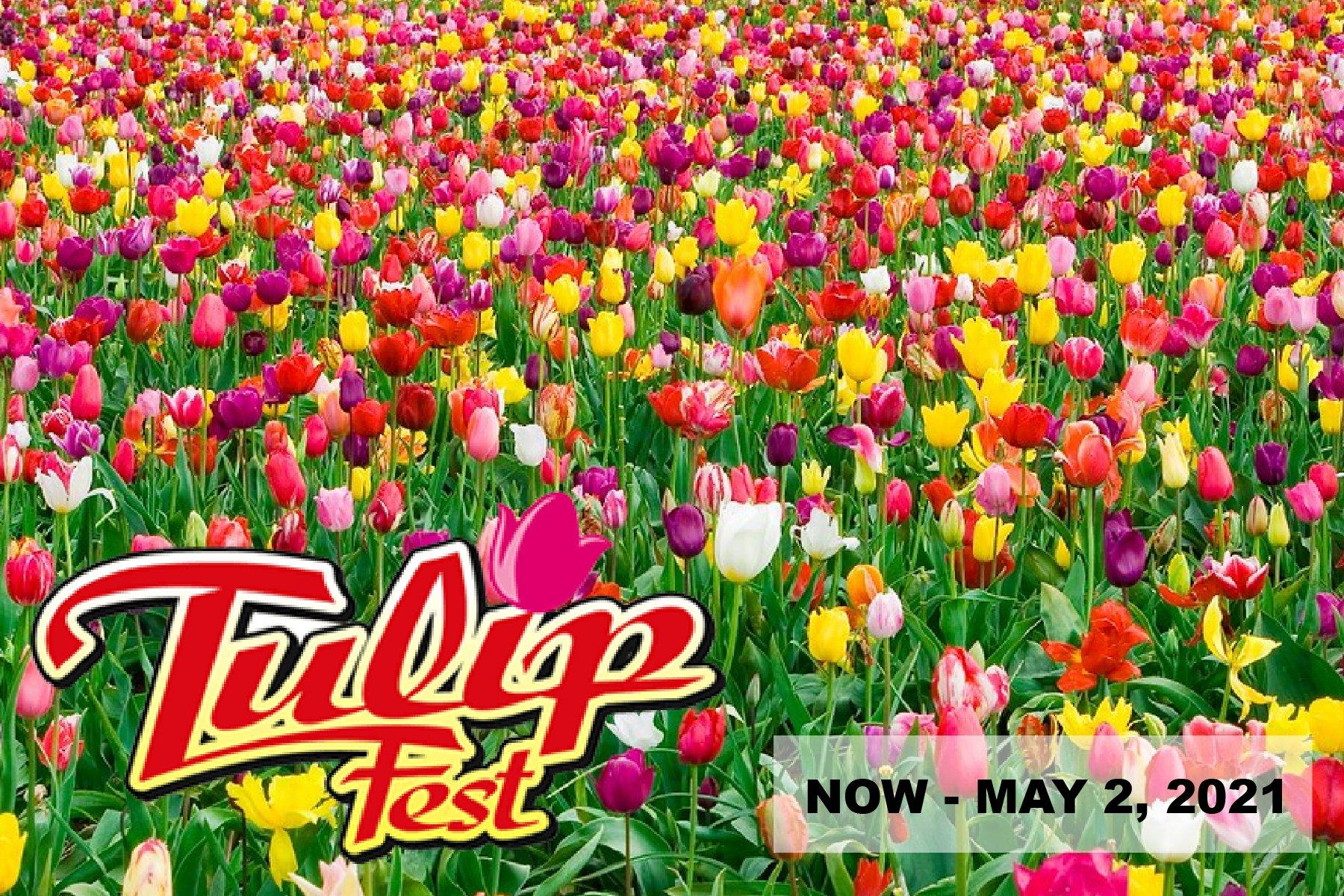 Wooden Shoe Tulip Festival 2021