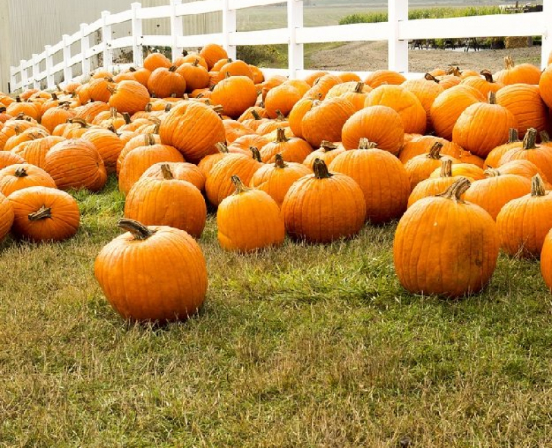 Oregon Pumpkin Patches and More 2021